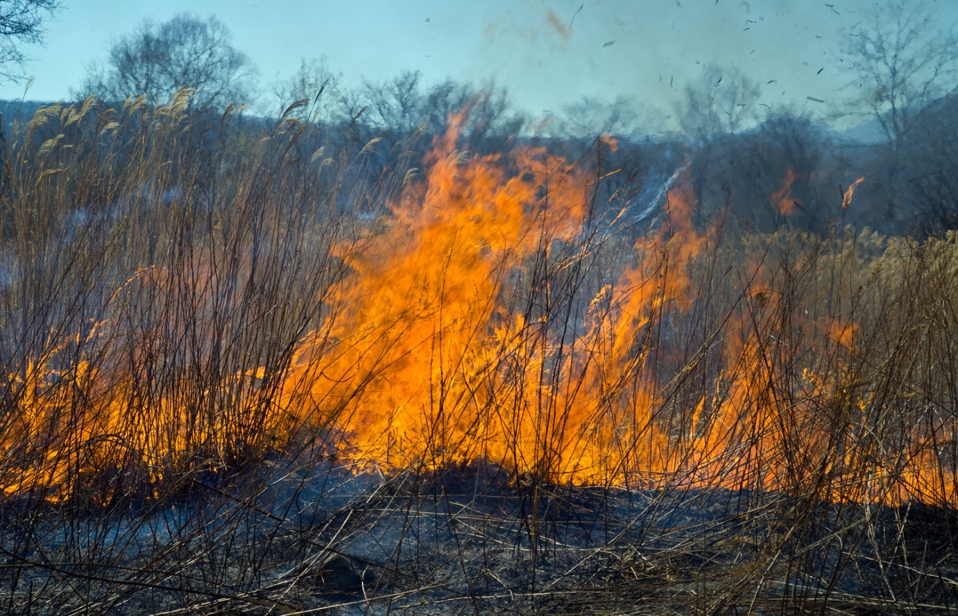 Drought Causes Fire