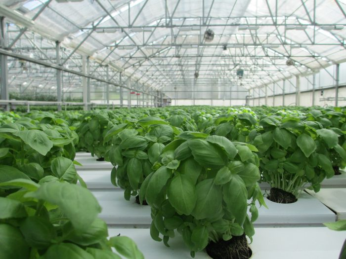 The Growth of GroundSource for Greenhouse Ground Source